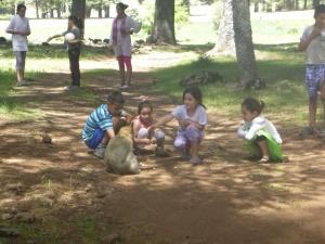 Feeding The Apes